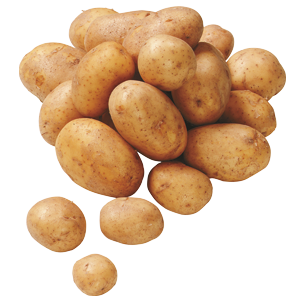 Freisteller Kartoffeln