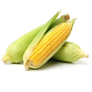 Freisteller Maiskolben