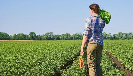 Bio Frau mit Salat und Möhren auf Salatfeld