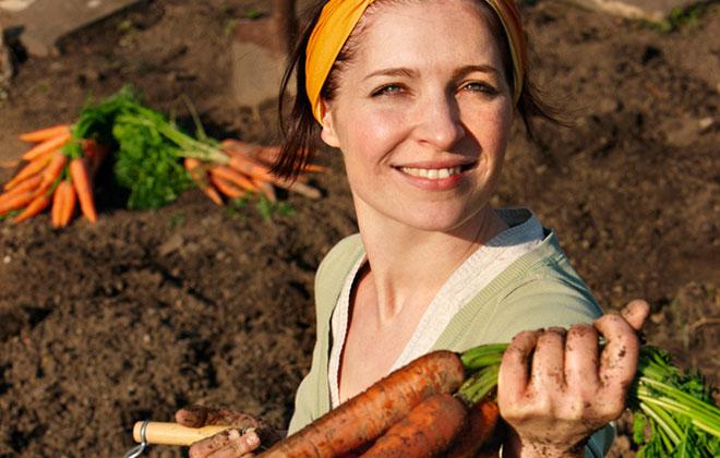 Frau erntet Karotten