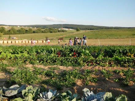 Kinder im Feld im Saisongarten Talhof Niederwetz