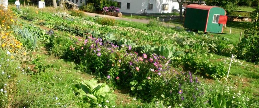 Gärtner am Feld