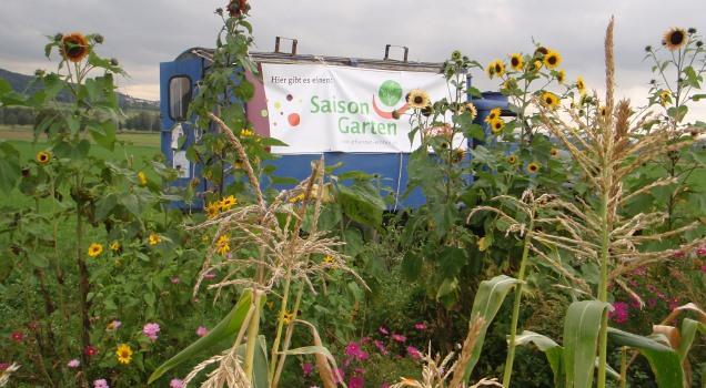 Gemüse gießen in Gießen