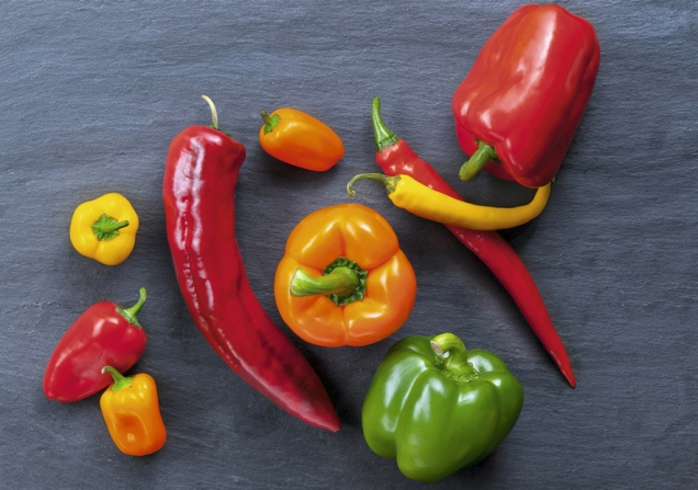 verschiedene Paprika-Sorte auf einer Schieferplatte