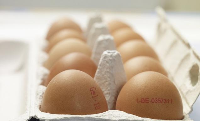 Eierkarton mit frischen Eiern